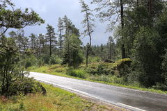田园诗风景在挪威 图库摄影