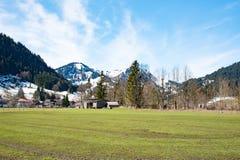 田园诗风景在有新鲜的绿色草甸的阿尔卑斯 免版税库存照片