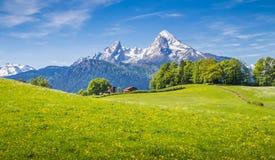 田园诗风景在有新鲜的绿色草甸的阿尔卑斯 免版税库存图片