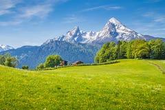 田园诗风景在有绿色草甸和花的阿尔卑斯 免版税库存照片