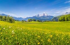 田园诗风景在有绿色草甸和花的阿尔卑斯 免版税库存图片