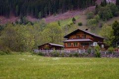 田园诗风景在阿尔卑斯与传统山瑞士山中的牧人小屋和新鲜的绿色山的春天吃草与花 免版税库存照片