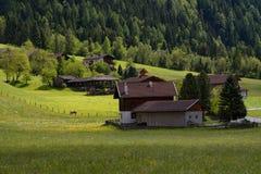 田园诗风景在阿尔卑斯与传统山瑞士山中的牧人小屋和新鲜的绿色山的春天吃草与花 免版税库存图片