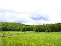 田园诗风景在阿尔卑斯 库存图片