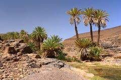 田园诗绿洲在撒哈拉大沙漠, Marocco, Uarzazat 库存图片