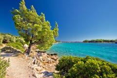 田园诗绿松石海滩在克罗地亚 免版税库存照片
