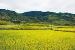 稻田在国家 免版税图库摄影