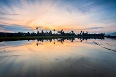 稻田在大山脚槟榔岛,马来西亚 免版税库存图片