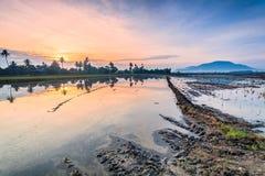 稻田在大山脚槟榔岛,马来西亚 库存照片