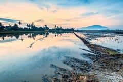 稻田在大山脚槟榔岛,马来西亚 免版税库存照片