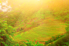 稻田在尼泊尔 免版税图库摄影