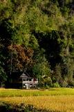 稻田的一点房子 免版税库存图片