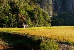 稻田的一点房子 免版税库存照片