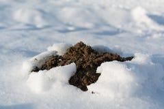 田鼠窝断裂通过雪 库存图片