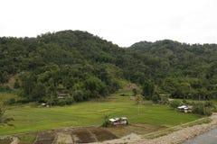 稻田 免版税库存图片