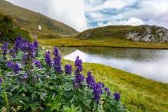 由一个冰河湖的山花 图库摄影