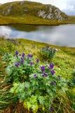 由一个冰河湖的山花 免版税库存照片