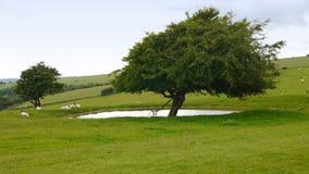 由一个池塘的树南下来的 免版税库存照片