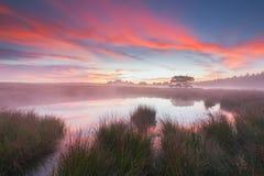 由一个池塘的美好的日出在荷兰 免版税库存图片