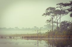 由一个湖的减速火箭的宁静在早晨。 库存照片