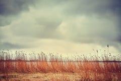 由一个湖的干燥芦苇在一多云天 免版税库存图片