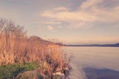 由一个冻湖的芦苇 免版税库存照片