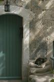 由一个绿色门的猫对石墙 库存照片