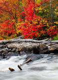 由一条冲的小河的漂流木头 图库摄影