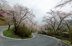 由一条弯曲的高速公路的簪子轮的令人惊讶的佐仓樱花在Miyasumi停放,冈山,日本 免版税图库摄影