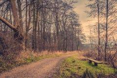由一条路的长凳在森林里 免版税库存照片