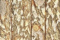 由与吠声的桦树板做的木盘区 库存图片