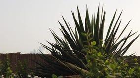 由于移动的植物绞 影视素材