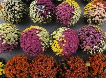 由五颜六色的春白菊做的花圃 免版税库存照片