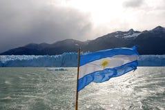 由佩里托美利奴绵羊的冰川的阿根廷旗子在巴塔哥尼亚 图库摄影