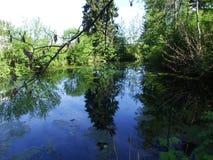 由公园的池塘在戈绍镇  免版税库存图片