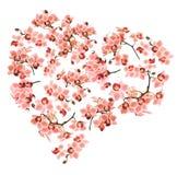 由兰花植物兰花做的心脏在白色背景 免版税图库摄影