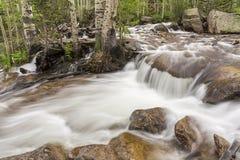 由冰川小河的白杨木 免版税库存图片