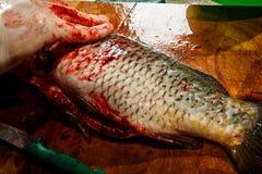 由刀子烹调在手套干净的整个生鱼的手 图库摄影