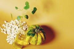 由南瓜籽和油做的南瓜 图库摄影