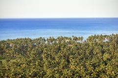 由原始水的棕榈树 图库摄影