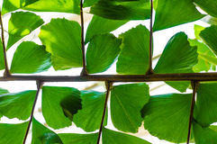 由后照的棕榈叶和传单 库存照片