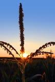 由后照的植物 免版税图库摄影