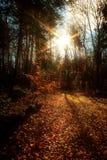 由后照的秋天 库存图片