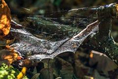 由后照的蜘蛛网 库存图片