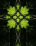 由后面照的交叉绿色叶子 库存图片
