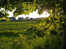 由后面照的叶子树离开与房子和领域 免版税库存图片
