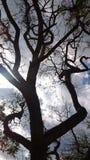 由后面照的树摘要 库存图片