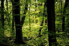 由后面照的树 免版税库存照片