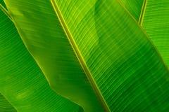 由后面照的棕榈叶 免版税库存照片