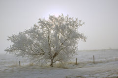 由后面照的结构树 免版税库存照片